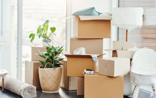 Piles of boxes and indoor plants